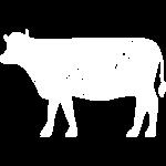 cow_white_square-01
